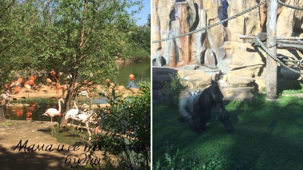 Гуляем по Московскому зоопарку